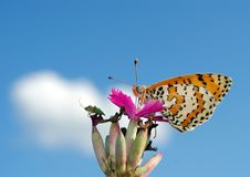 Beautiful butterfly on a meadow.  brush-footed butterflies. copy spaces. Stock Photos