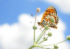 Beautiful butterfly on a meadow.  brush-footed butterflies. copy spaces. Royalty Free Stock Image