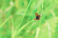 Beautiful butterfly on natural bright green Stock Photography