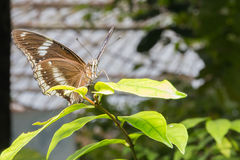 Beautiful butterfly in nature royalty free stock photography