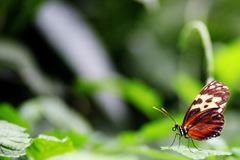 Beautiful Butterfly in Nature Garden Background With Copy Space stock photo