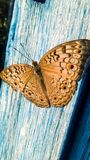 Beautiful Butterfly in Nature stock photo