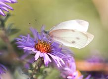 Beautiful butterfly in nature. In the park in nature Stock Image