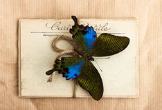 Beautiful butterfly and old post cards Royalty Free Stock Photography