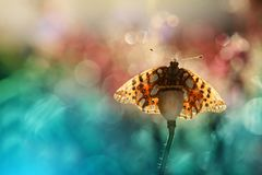 A beautiful butterfly on an orange background, sitting and resting. Butterflies from my garden are beautiful, they have nice colors and interesting backgrounds royalty free stock photos