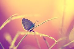 A beautiful butterfly on an orange background, sitting and resting. Just to fly away royalty free stock photos