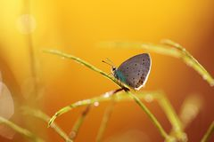 A beautiful butterfly on an orange background, sitting and resting. Just to fly away stock photography