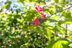 Beautiful butterfly outoodrs in the park of tropical Bali island, Indonesia. Exotic butterfly. Stock Images