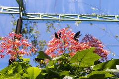 Beautiful butterfly outoodrs in the park of tropical Bali island, Indonesia. Exotic butterfly. Stock Photo