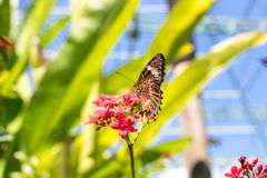 Beautiful butterfly outoodrs in the park of tropical Bali island, Indonesia. Exotic butterfly. Stock Photos