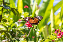 Beautiful butterfly outoodrs in the park of tropical Bali island, Indonesia. Exotic butterfly. Stock Image