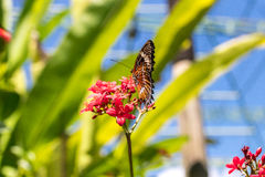 Beautiful butterfly outoodrs in the park of tropical Bali island, Indonesia. Exotic butterfly. Royalty Free Stock Photos