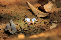 Beautiful butterfly in  Pang Sida national park. Stock Photos