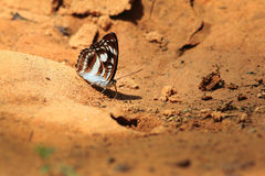 Beautiful butterfly in  Pang Sida national park. Stock Photography