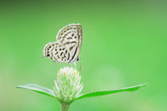 Beautiful butterfly perching on small flower as background Royalty Free Stock Images