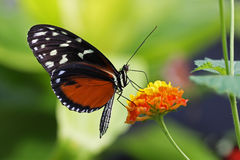 Beautiful butterfly, photo taken with macrolens Royalty Free Stock Image