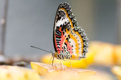 Beautiful butterfly on piece of fruit Royalty Free Stock Image