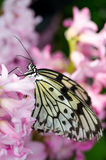 Beautiful butterfly on pink plant Stock Photography