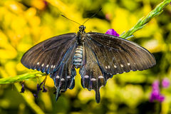 Beautiful butterfly on the plant Royalty Free Stock Images