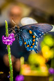 Beautiful butterfly on the plant Royalty Free Stock Photo