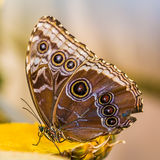 Beautiful butterfly on the plant Stock Photography