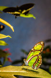 Beautiful butterfly on the plant Stock Photo