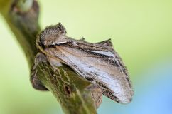 Beautiful butterfly prominent sleeps on a branch on a green back. Ground Stock Photos