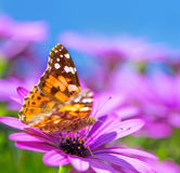 Beautiful butterfly on purple flower Royalty Free Stock Photography