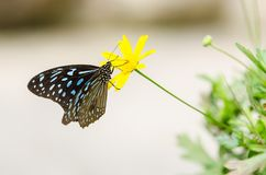 Beautiful butterfly resting on the flower royalty free stock images