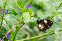 Beautiful butterfly resting on the leaf royalty free stock photo