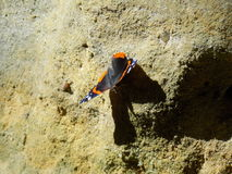 Beautiful Butterfly on the Rock in Sunny Day Stock Images