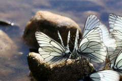 Beautiful butterfly on the rocks near the water, nature, Stock Image