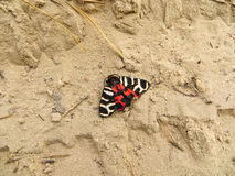 Beautiful butterfly. On a sand royalty free stock photo