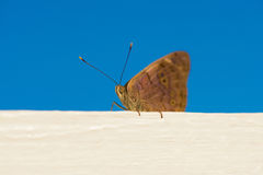 Beautiful butterfly that sits. Photo taken at the beach in the Dominican Republic. Stock Photography