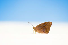Beautiful butterfly that sits. Photo taken at the beach in the Dominican Republic. Royalty Free Stock Photo