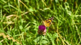 beautiful butterfly sits on the wildflowers. general plan. color