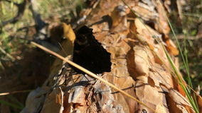 Beautiful butterfly sits on a wooden stump. And shakes its wings stock footage