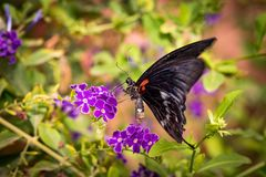 Beautiful butterfly sitting on a flower. A close-up view of a beautiful butterfly sitting on a flower stock photography