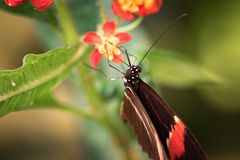 Beautiful butterfly sitting on a flower. A close-up view of a beautiful butterfly sitting on a flower stock photos