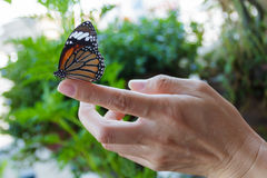 Beautiful butterfly sitting on the girl finger. Royalty Free Stock Photos