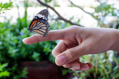 Beautiful butterfly sitting on the girl finger. Stock Photos