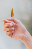 Beautiful butterfly sitting on the girl finger. Stock Image