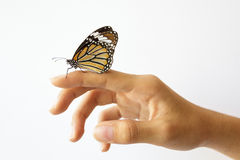 Beautiful butterfly sitting on the girl hand. Stock Images