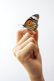 Beautiful butterfly sitting on the girl hand. stock image