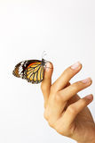 Beautiful butterfly sitting on the girl hand. royalty free stock photos