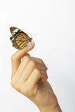 Beautiful butterfly sitting on the girl hand. Royalty Free Stock Image