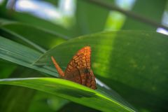 Beautiful butterfly sitting on a green leaf stock photo