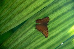 Beautiful butterfly sitting on a green leaf royalty free stock photography