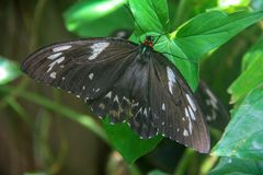 Beautiful butterfly sitting on a green leaf stock photos