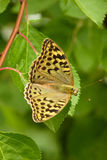 Beautiful butterfly sitting on a green leaf. With selective focus royalty free stock images